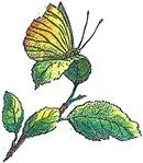 Carl Von Linnékliniken HB logo