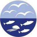 Brovandeskolen logo