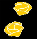 Leonora Blomster logo