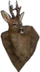 Zoologisk Konservator,Magnus Jansson logo