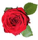 Lenes Blomster logo