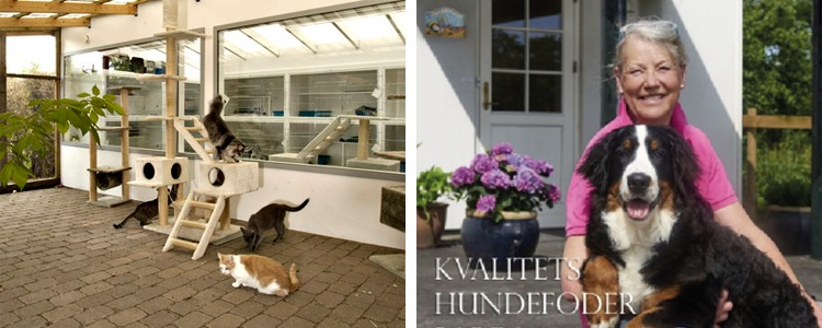 Hundepension uhre
