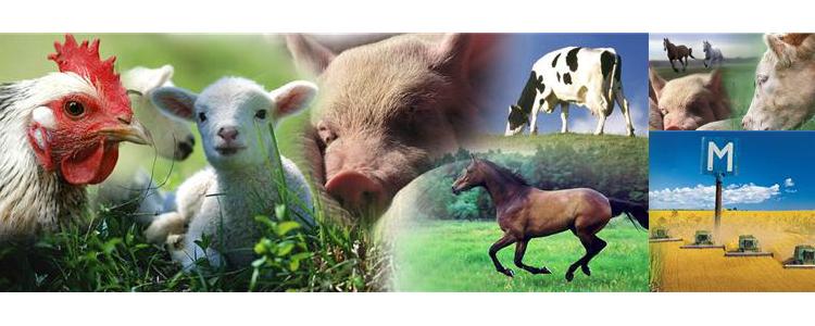 djur och natur lidköping