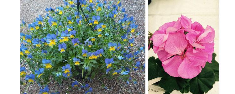 Sasongens Blommor Foretag Eniro Se Sida 57