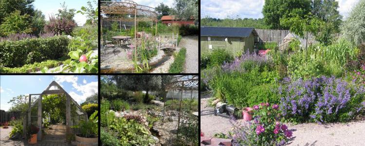 Senneby trädgård