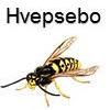 Hvepsebo