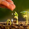 Plantevern