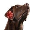 Hud og øre -problematikk