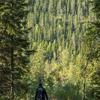 Skogsbruksplaner