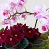 Om Tillas Blomster