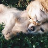 Hund og katt