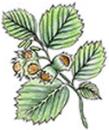 Hasselgårdens Förskola AB logo